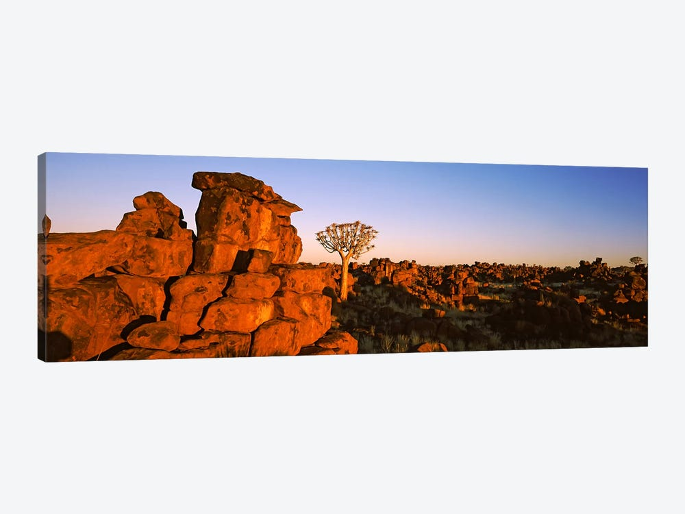 Quiver tree (Aloe dichotoma) growing in rocksDevil's Playground, Namibia by Panoramic Images 1-piece Canvas Print