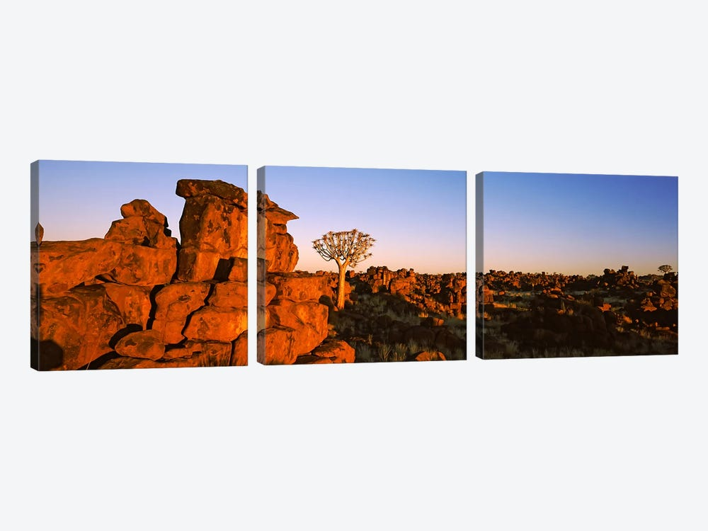 Quiver tree (Aloe dichotoma) growing in rocksDevil's Playground, Namibia 3-piece Canvas Print