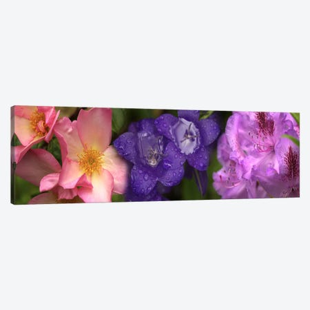 Close-up of flowers 3-Piece Canvas #PIM10526} by Panoramic Images Canvas Artwork