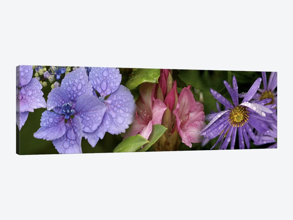 Close-up of flowers by Panoramic Images 1-piece Art Print