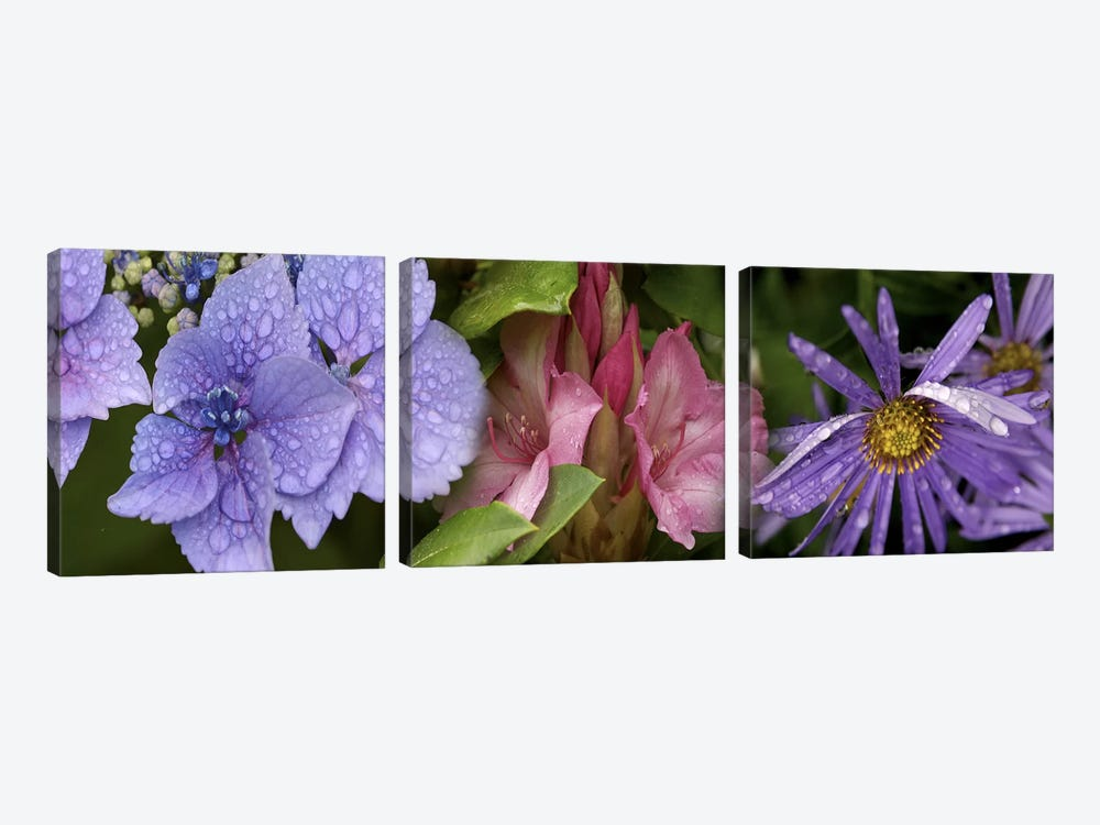 Close-up of flowers by Panoramic Images 3-piece Canvas Print