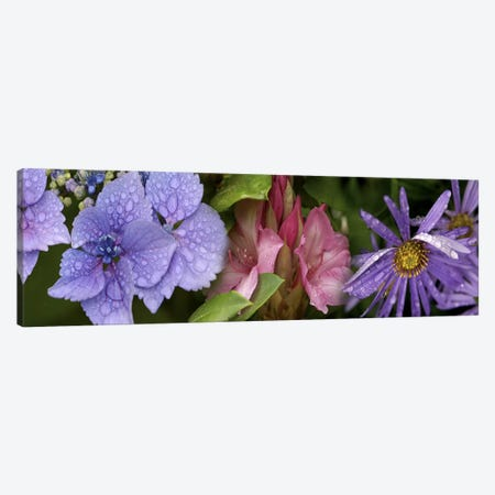 Close-up of flowers 3-Piece Canvas #PIM10529} by Panoramic Images Canvas Print