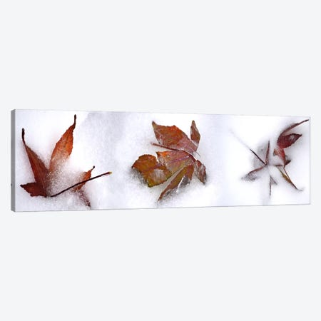 Three fall leaves in snow Canvas Print #PIM10530} by Panoramic Images Canvas Art