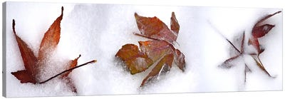 Three fall leaves in snow Canvas Art Print