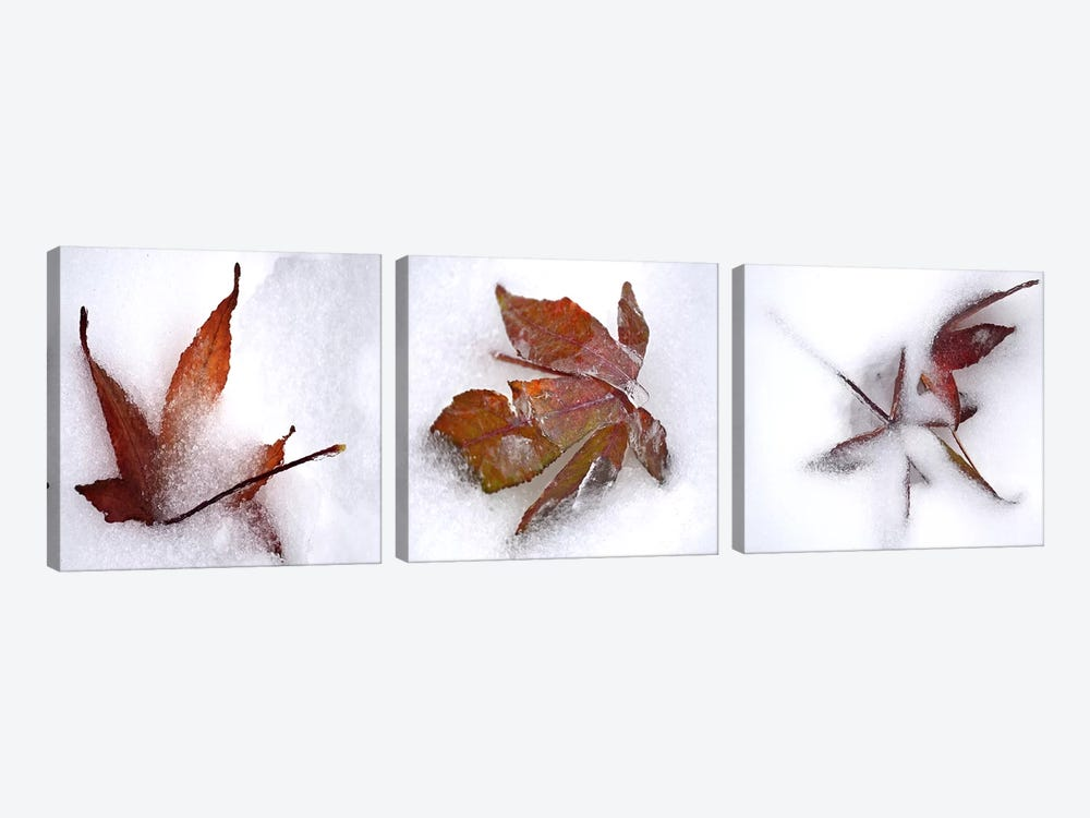 Three fall leaves in snow by Panoramic Images 3-piece Canvas Print
