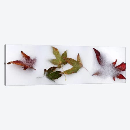 Leaves in the snow Canvas Print #PIM10531} by Panoramic Images Canvas Artwork