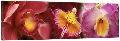 Details of red and violet Orchid flowers Canvas Art Print
