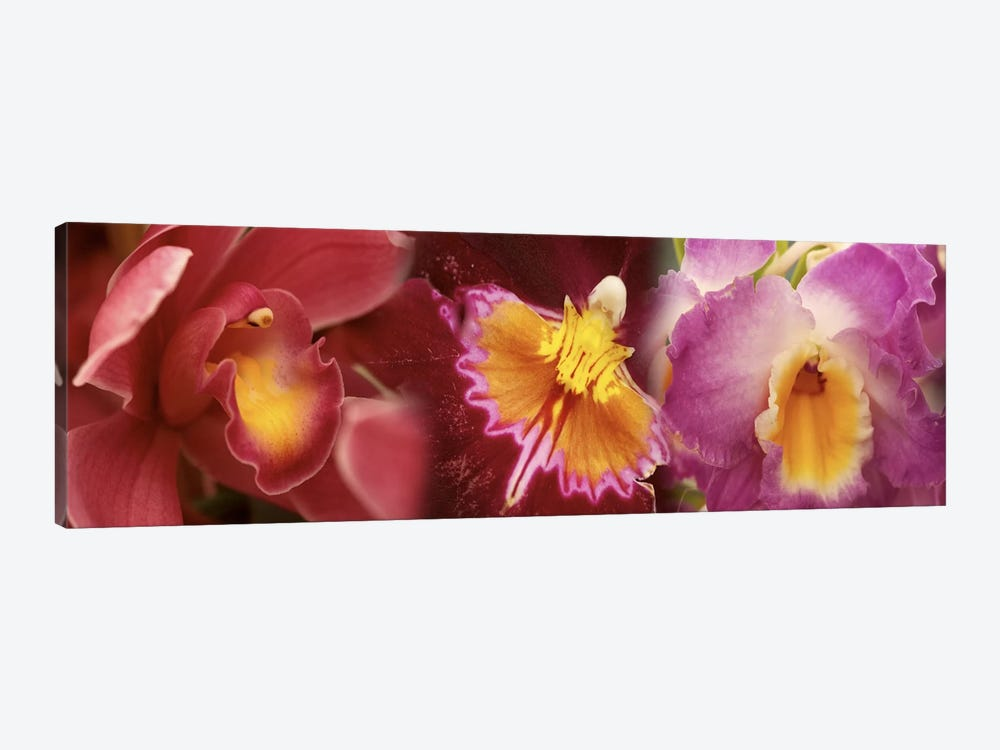 Details of red and violet Orchid flowers by Panoramic Images 1-piece Canvas Art