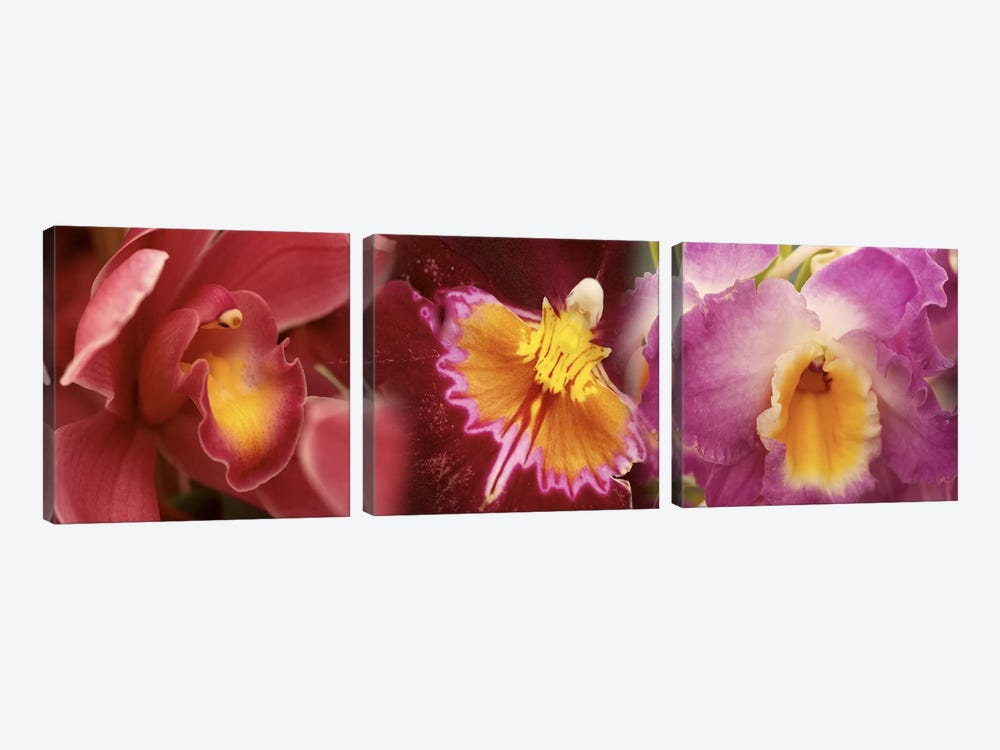 Details of red and violet Orchid flowers by Panoramic Images 3-piece Canvas Artwork