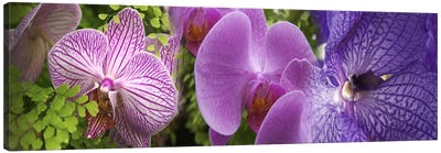 Details of violet orchid flowers Canvas Art Print