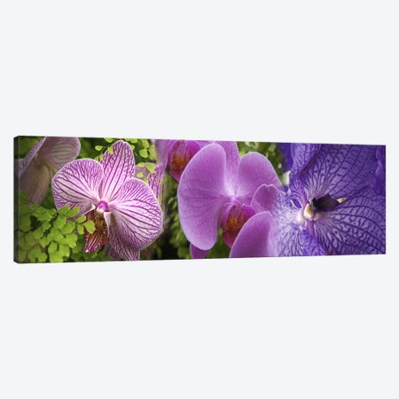 Details of violet orchid flowers Canvas Print #PIM10534} by Panoramic Images Art Print
