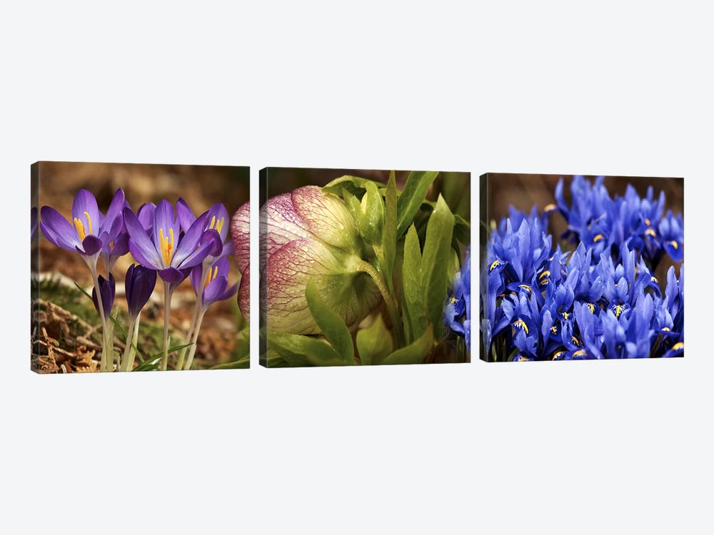 Details of Crocus flowers 3-piece Canvas Artwork