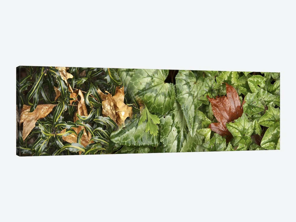 Details of green leaves by Panoramic Images 1-piece Art Print