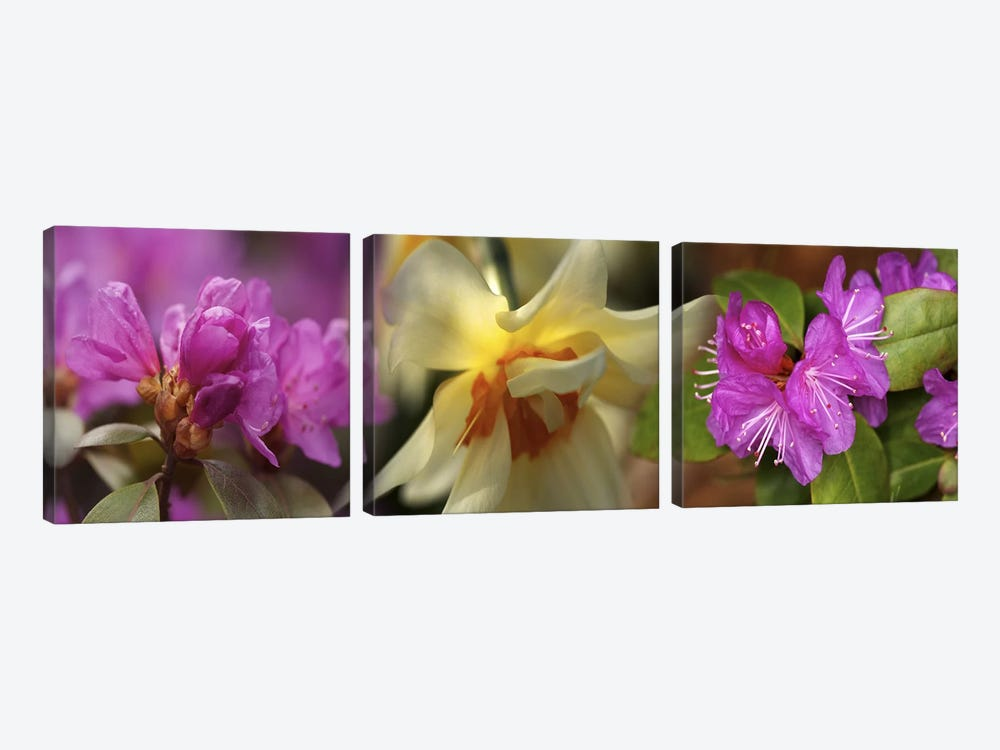 Details of flowers by Panoramic Images 3-piece Art Print