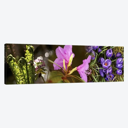 Details of early spring & crocus flowers Canvas Print #PIM10539} by Panoramic Images Canvas Wall Art
