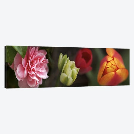 Details of colorful tulip flowers Canvas Print #PIM10541} by Panoramic Images Art Print