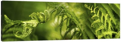 Close-up of multiple images of ferns Canvas Art Print