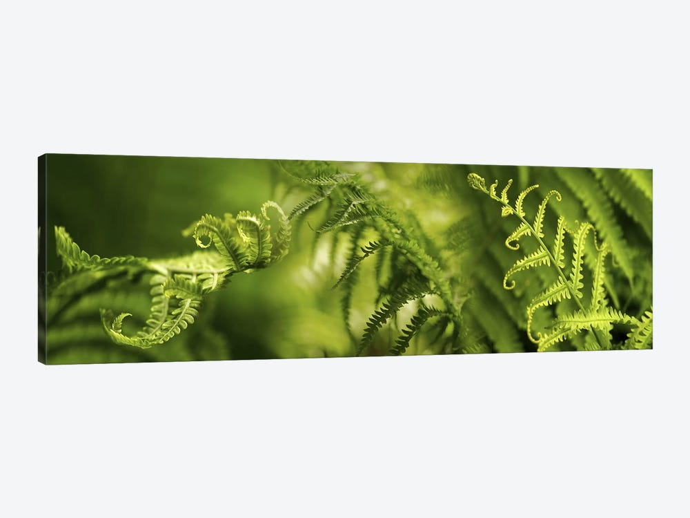 Close-up of multiple images of ferns by Panoramic Images 1-piece Canvas Print