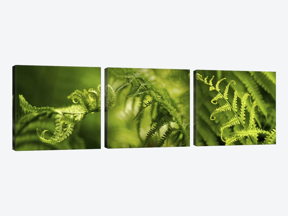 Close-up of multiple images of ferns by Panoramic Images 3-piece Canvas Print