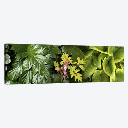 Details of luscious leaves Canvas Print #PIM10544} by Panoramic Images Canvas Wall Art