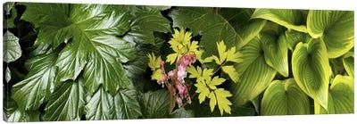 Details of luscious leaves Canvas Print #PIM10544