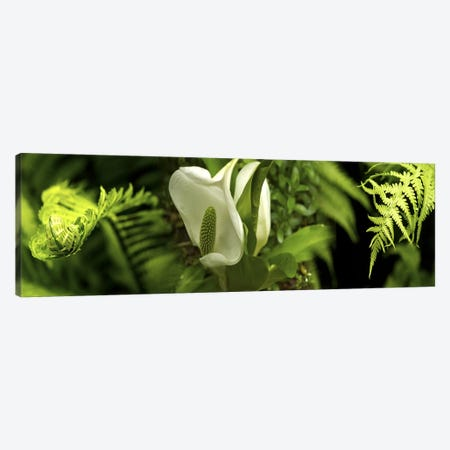 Close-up of flowers & leaves Canvas Print #PIM10546} by Panoramic Images Canvas Wall Art