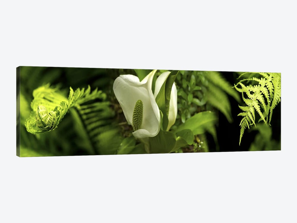 Close-up of flowers & leaves by Panoramic Images 1-piece Canvas Art