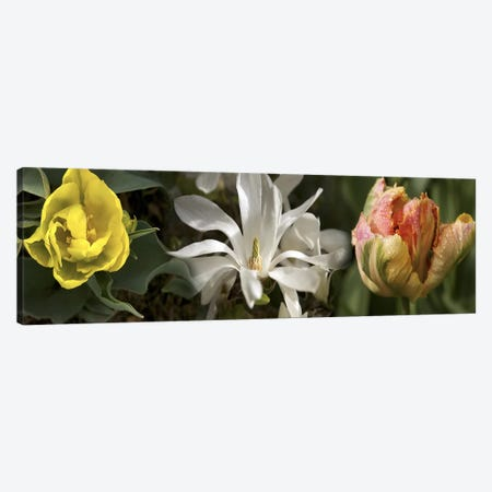 Open blossom flowers Canvas Print #PIM10547} by Panoramic Images Canvas Artwork