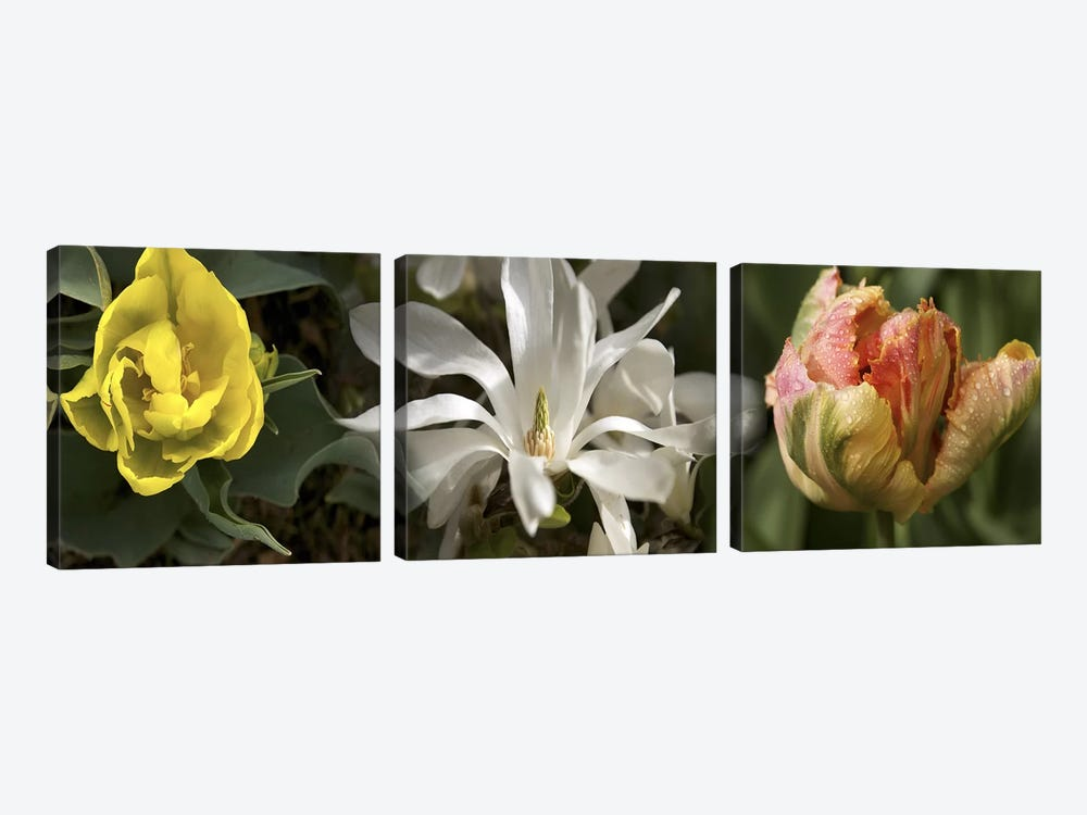 Open blossom flowers by Panoramic Images 3-piece Art Print