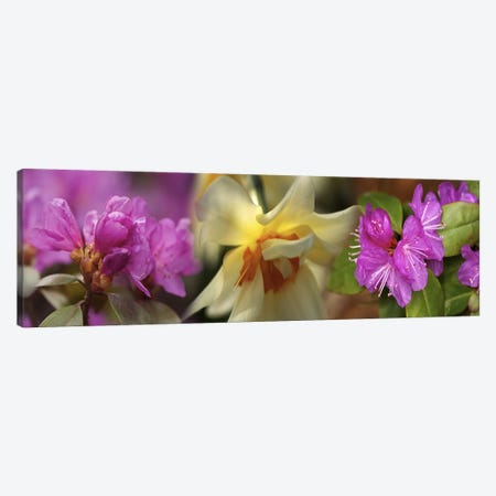 Details of flowers Canvas Print #PIM10552} by Panoramic Images Canvas Artwork
