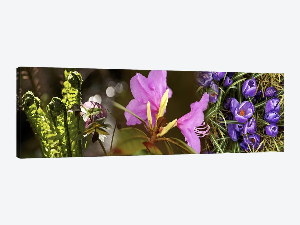 Details of early spring flowers by Panoramic Images 1-piece Canvas Art