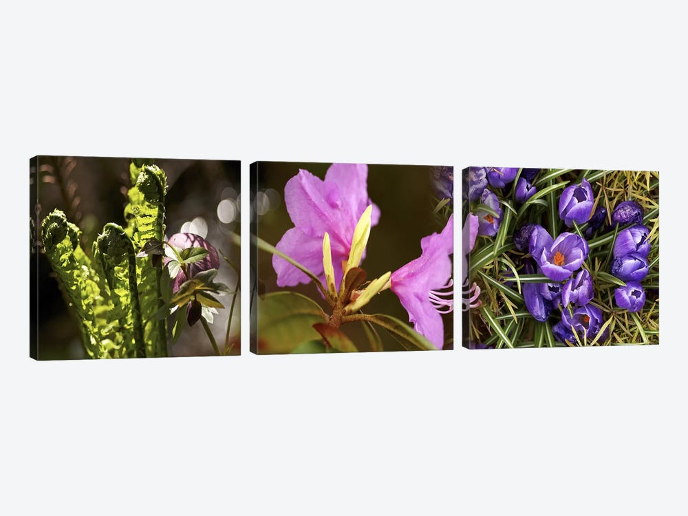 Details of early spring flowers by Panoramic Images 3-piece Canvas Art