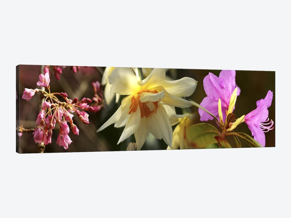 Details of flowers by Panoramic Images 1-piece Canvas Print