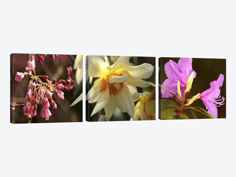 Details of flowers by Panoramic Images 3-piece Canvas Print
