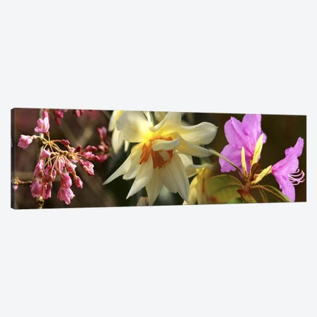 Details of flowers 3-Piece Canvas #PIM10554} by Panoramic Images Canvas Print