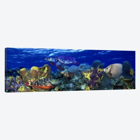 Stoplight parrotfish (Sparisoma viride) with a Hawksbill Turtle (Eretmochelys Imbricata) underwater Canvas Print #PIM10560} by Panoramic Images Art Print