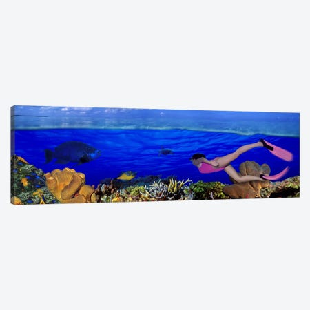 Underwater View Of A Diver Along A Reef Marine Ecosystem Canvas Print #PIM10562} by Panoramic Images Canvas Print