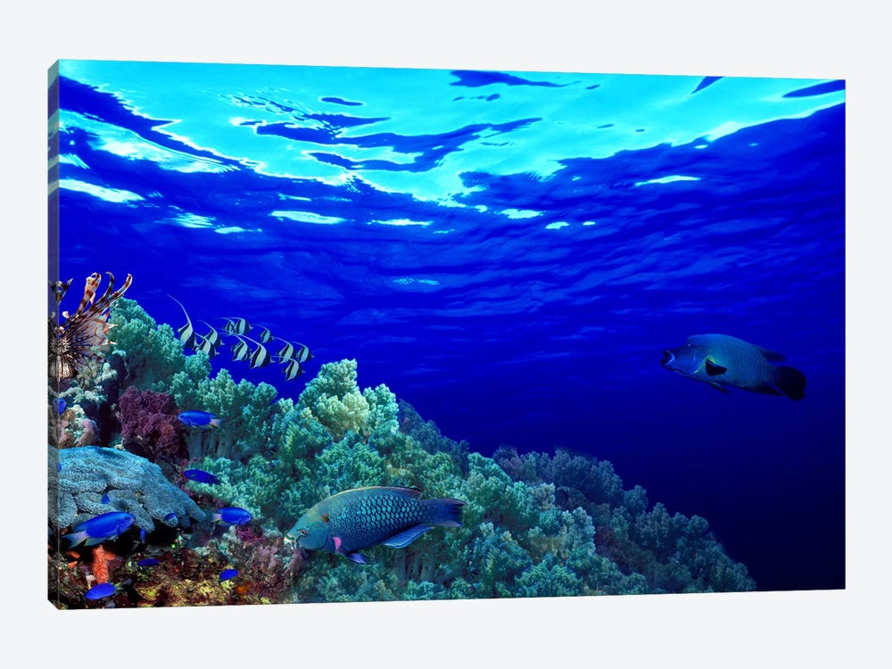 Underwater view of Longfin bannerfish (Heniochus acuminatus) with Red Firefish (Nemateleotris magnifica) and soft corals by Panoramic Images 1-piece Canvas Art