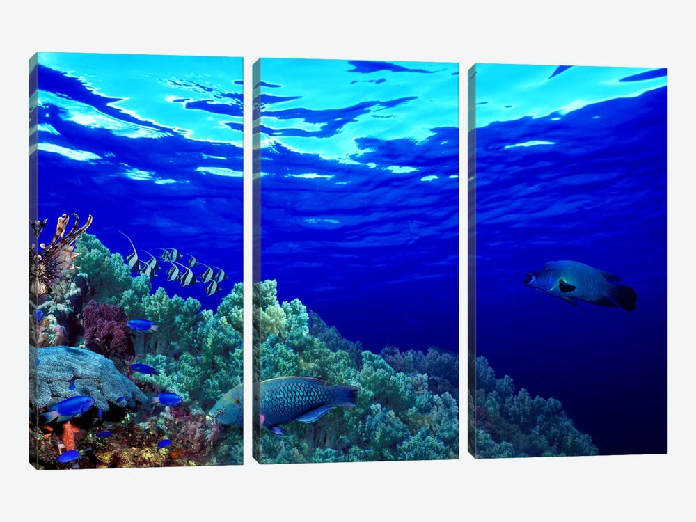 Underwater view of Longfin bannerfish (Heniochus acuminatus) with Red Firefish (Nemateleotris magnifica) and soft corals by Panoramic Images 3-piece Canvas Artwork