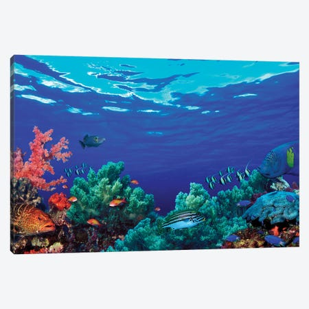Underwater Coral Reef Community Canvas Print #PIM10565} by Panoramic Images Canvas Art