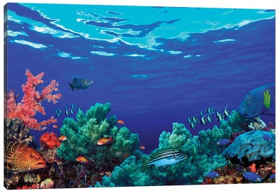 Underwater Coral Reef Community Canvas Art Print
