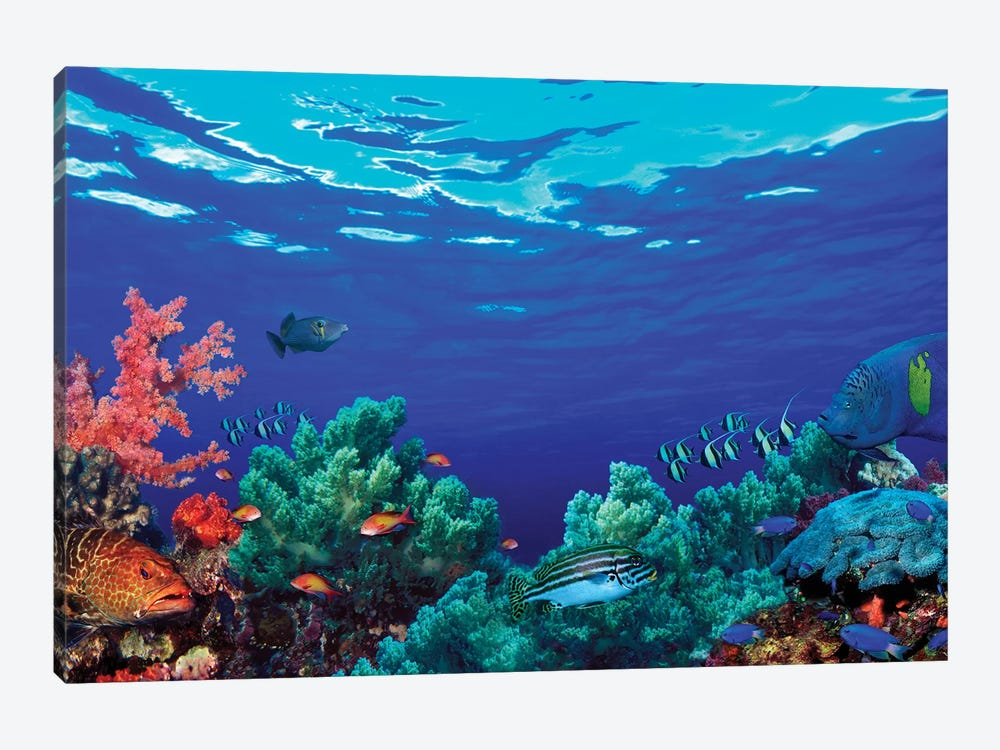 Underwater Coral Reef Community by Panoramic Images 1-piece Canvas Art Print