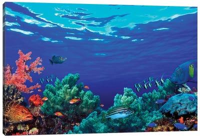 Underwater Coral Reef Community Canvas Art Print