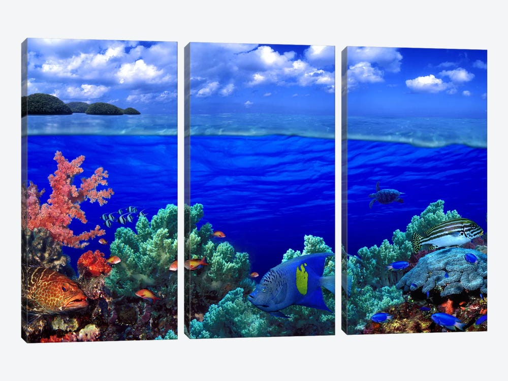 Underwater view of Yellowbar Angelfish (Pomacanthus maculosus) with Tiger Grouper (Mycteroperca tigris) and Oriental Sweetlips ( by Panoramic Images 3-piece Canvas Wall Art