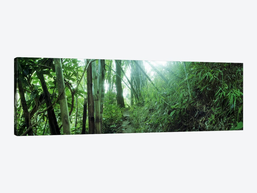 Bamboo forest, Chiang Mai, Thailand by Panoramic Images 1-piece Canvas Artwork
