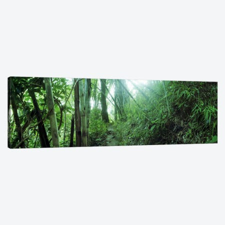 Bamboo forest, Chiang Mai, Thailand Canvas Print #PIM10615} by Panoramic Images Canvas Artwork