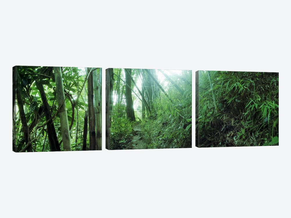 Bamboo forest, Chiang Mai, Thailand by Panoramic Images 3-piece Canvas Artwork