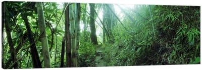 Bamboo forest, Chiang Mai, Thailand Canvas Art Print