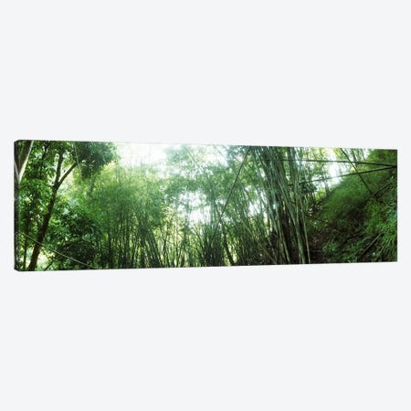 Bamboo forest, Chiang Mai, Thailand #2 Canvas Print #PIM10617} by Panoramic Images Canvas Wall Art