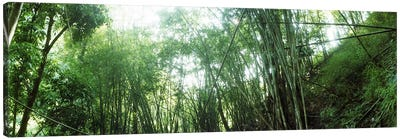 Bamboo forest, Chiang Mai, Thailand #2 Canvas Print #PIM10617